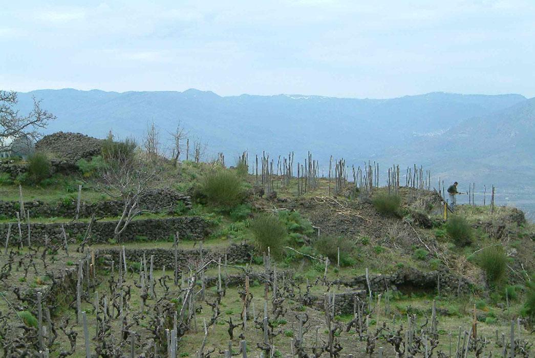 The-vineyards-of-Frank-Cornelissen-on-the-slopes-of-Mount-Etna