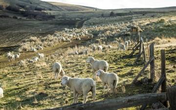 Weekly-Rundown-Patagonia-Leah-Nash-Wall-Street-Journal