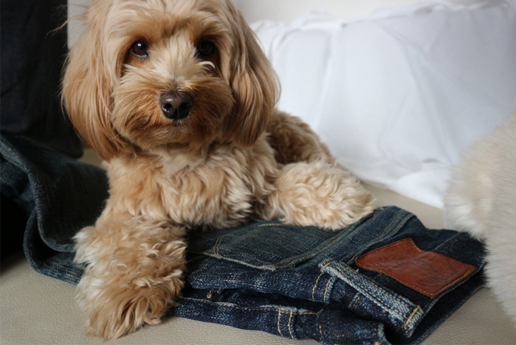 fade-friday-oni-517xx-2-years-4-washes-1-soak-with-dog