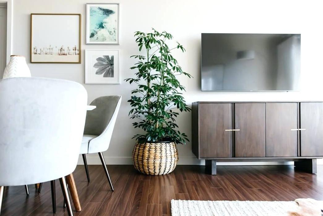 A-Beginner's-Guide-To-House-Plants-Image-via-Alpmedia