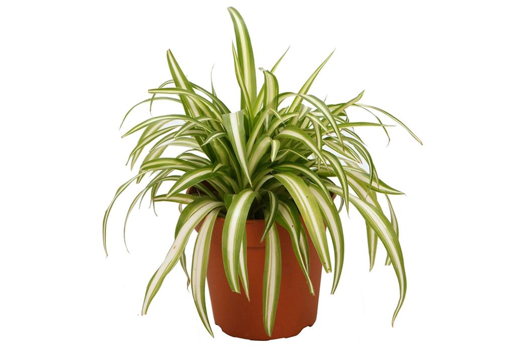 A-Beginner's-Guide-To-House-Plants-Image-via-Homebase
