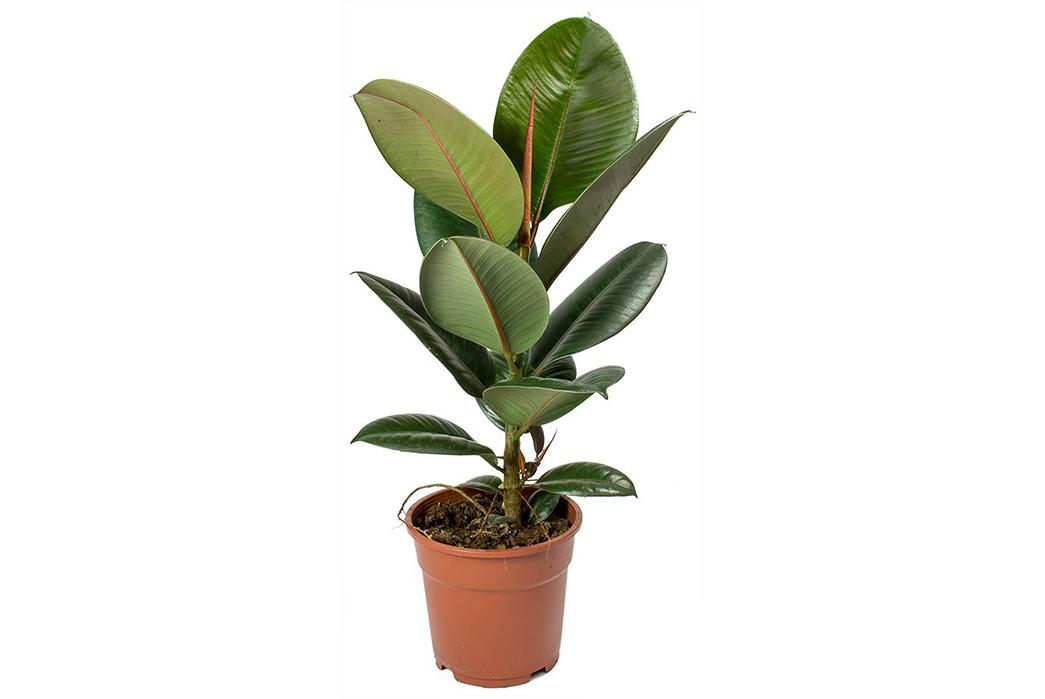 A-Beginner's-Guide-To-House-Plants-Image-via-Hortology