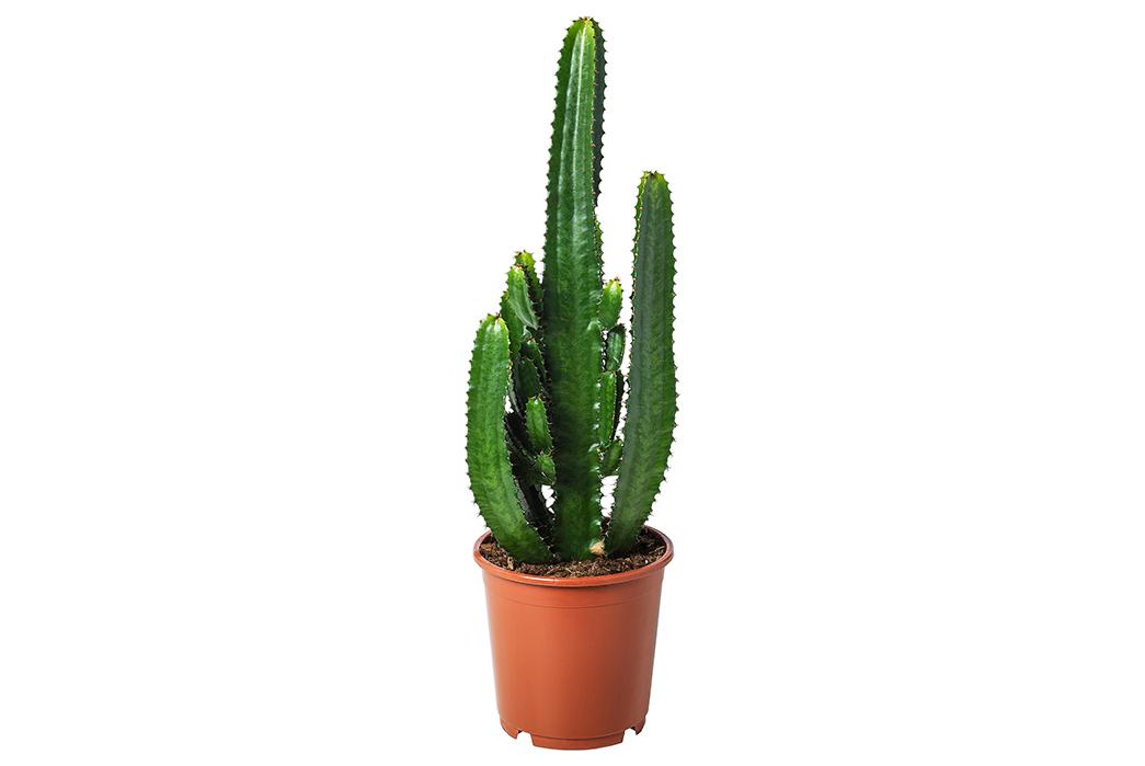 A-Beginner's-Guide-To-House-Plants-Image-via-Ikea-2