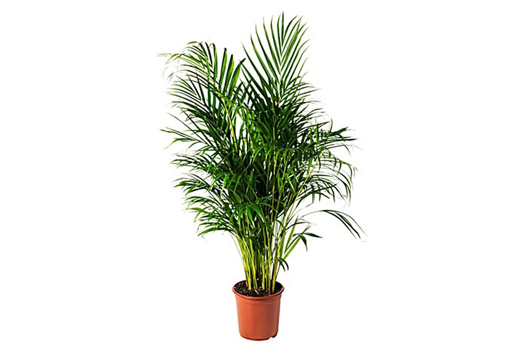 A-Beginner's-Guide-To-House-Plants-Image-via-Ikea-3