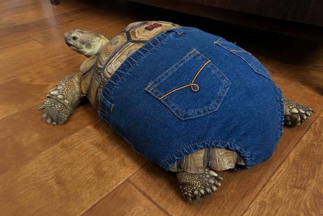denim-tortoise