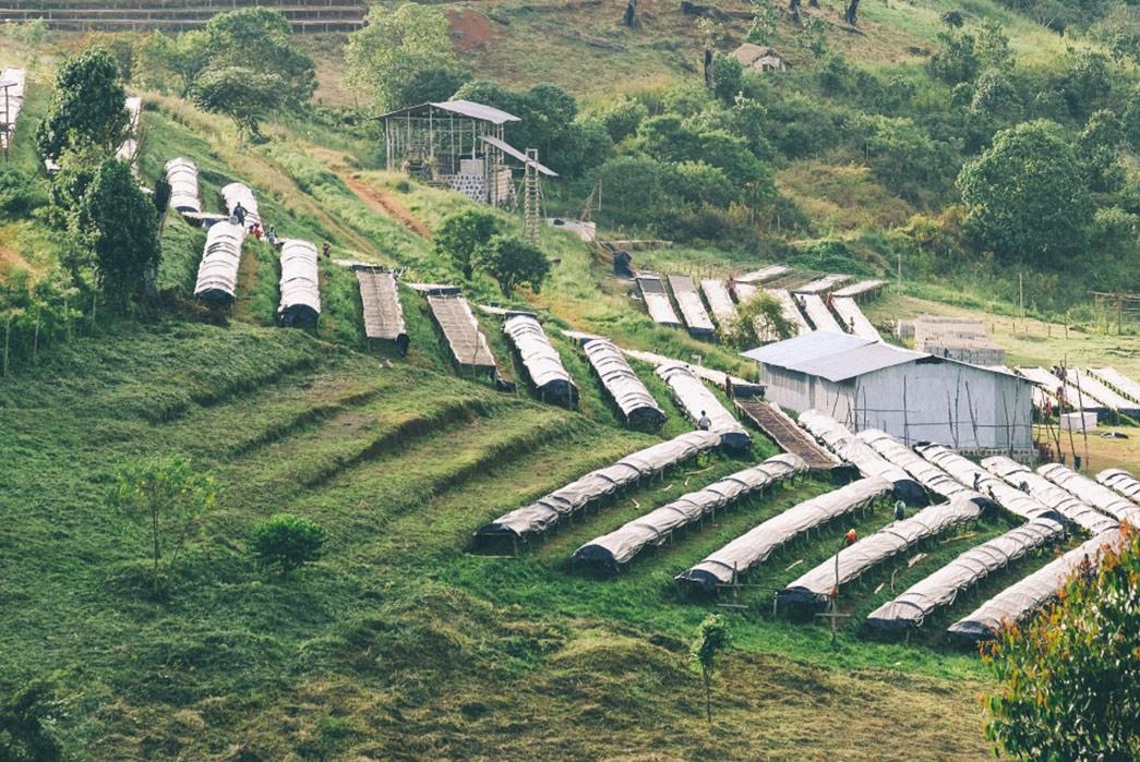 gesha-village-ethiopia-intelligentsia