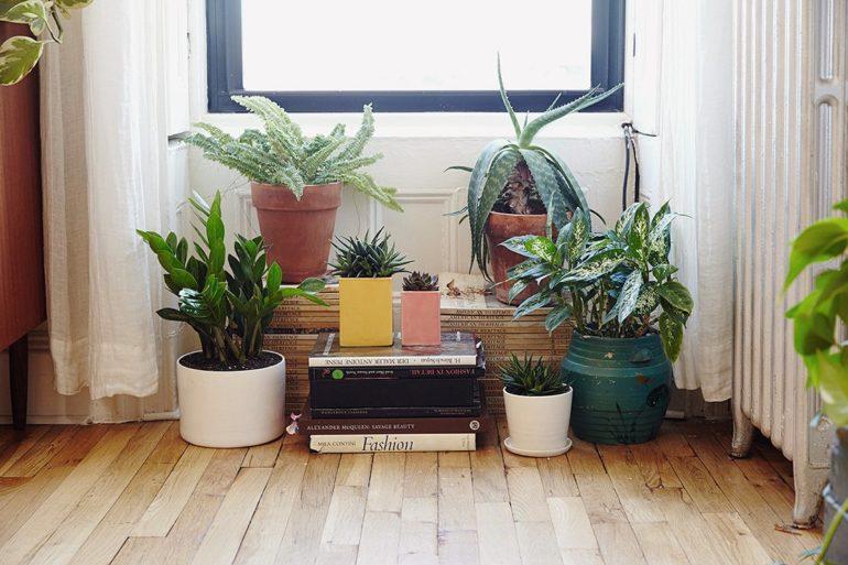 houseplants-lead-the-sill