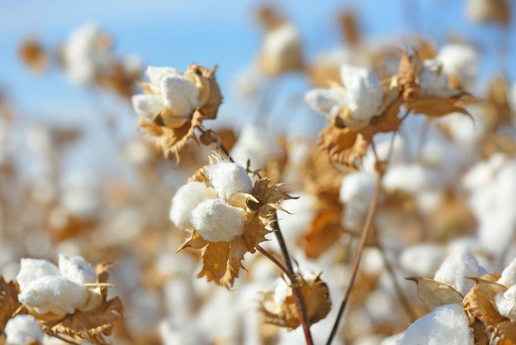 The-Types-of-Cottons-You-Should-Know Image via Cottonandcare.com