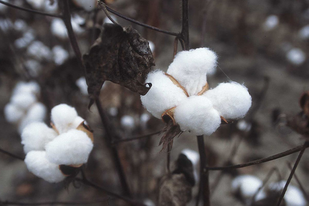 Does-Cotton-Kill-The-Moisture-Wicking-Properties-of-Various-Fabrics-Image-via-Wikipedia