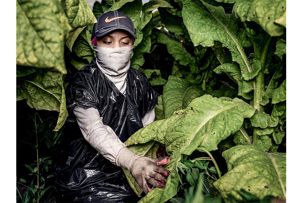 What-Ended-Child-Labor-in-the-US---Labor-Rights-History-Child-Worker-in-North-Carolina-Tobacco-Field.-Image-via-Human-Rights-Watch.